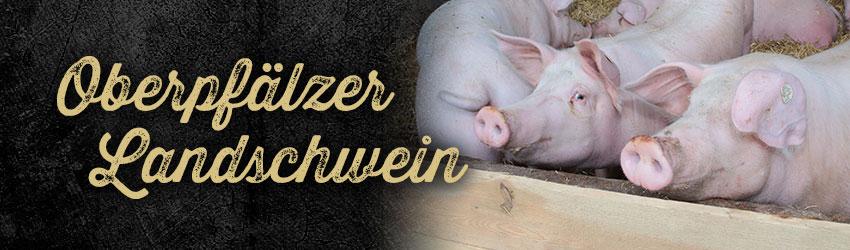 Oberpfälzer Landschwein